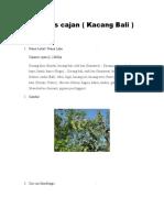 Cajanus cajan Agrostologi