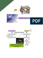 Proteínas y Ácidos Nucleicos 2017 (1).pdf