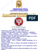 T2-Organización Celular Del SN