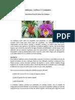 Cuidado Y Cultivo de Cattleyas