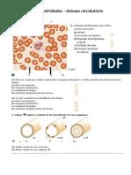 Sistema Circulatório CN6ºano