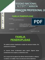 9 Familia Peneroplidae