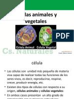 Power Celulas Animales y Vegetales SEMANA 24 AGOSTO 2013