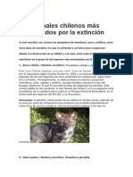 Animales Chile