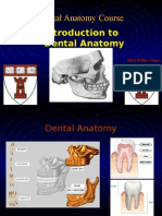 Dental Anatomy Introduction