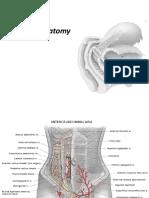 1. Maternal Anatomy