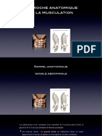 Anatomie de La Musculation