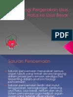 9.-Fisiologi-Pergerakan-Usus-Halus-ke-Usus-Besar.pptx