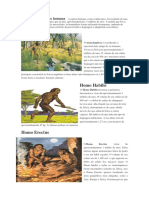 5 etapas da evolução humana   A espécie humana.docx