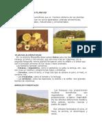 UTILIDAD DE LAS PLANTAS.docx