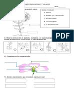 Guía de Ciencias Naturales 3