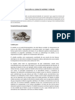 INTRODUCCIÓN AL COBALTO HIERRO Y NÍQUEL.docx