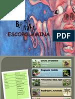 Presentación Escopolamina