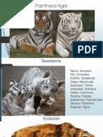 Panthera tigris.pptx