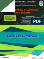 GLUCOCALIX - CÁPSULA BACTERIANA