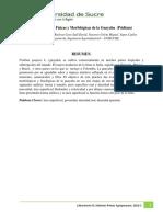 Características Físicas y Morfológicas de La Guayaba