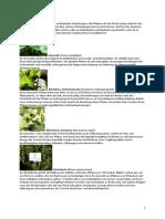 DIE_GIFTPFLANZEN_F_PFERDE.pdf
