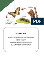 4 reporte entomologia.docx
