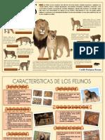 Infografía Felinos