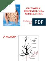Anatomia y Fisiologia Del Sistema Nervioso1