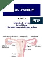 6. Siklus Ovarium