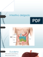 Intestino Delgado presentación