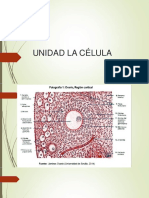 Clase -Membrana Plasmatica