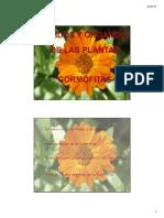 tejidosyrganosdelasplantascormfitas