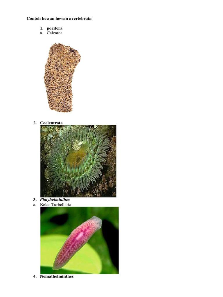 9400 Koleksi Contoh Gambar Hewan Avertebrata Gratis Terbaik