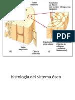 estructuradeltejidooseo-140707161116-phpapp01