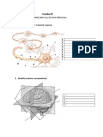 0102 Esquemas Unidad 2 Anatomía Del Sistema Nervioso (1)