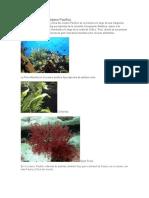 Flora y Fauna Del Océano Pacifico SEBASTIAN