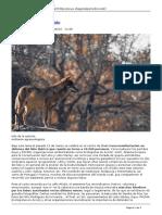 Periodico Diagonal - Lobo Vivo Lobo Protegido - 2017-08-30
