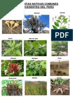 21 Plantas Nativas Comunes Procedentes Del Perú