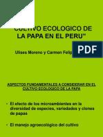 05 Cultivo Ecologico de La Papa Enelperu Ulises Moreno (1)