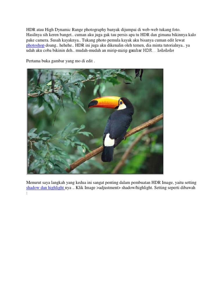 Download 41 Koleksi Background Bunga Hdr HD Gratis