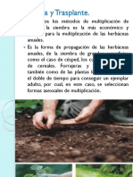 siembraytrasplante-.ppt