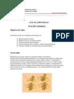 PunciA3n Arterial