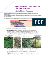 Plantas.doc