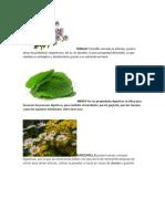 tarea plantas