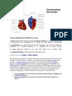 Características Del Corazón