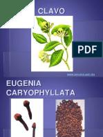 Aceites Biocelulares C-e