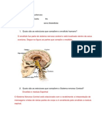 Estudo Dirigido Do Sistema Nervoso Central
