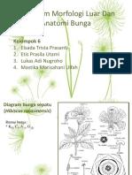 Praktikum Morfologi Luar Dan Anatomi Bunga