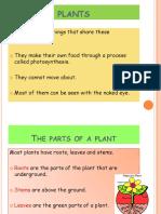 Plants 6º Primary