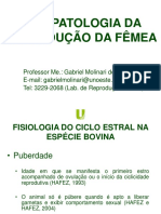 2- Fisiologia Do Ciclo Estral Nas Especies Domesticas Gabriel