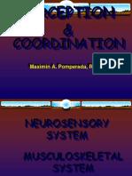 Perception & Coordination