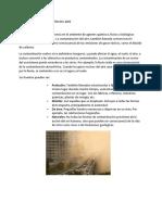 Formas de contaminacion del aire.docx