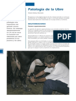 cys_5_Patologia_Ubre.pdf
