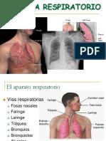 Sistema Respiratorioppt